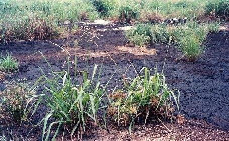 Proponen un innovador método para evaluar los riesgos que suponen los suelos contaminados por hidrocarburos